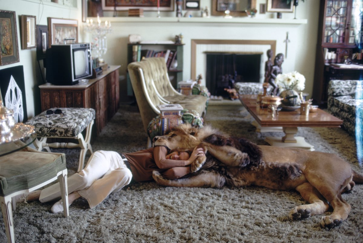 Subject: Tippi Hederen wrestling with pet lion named Neil. Sherman Oaks, California May 1971 Photographer- Michael Rougier Time Inc Owned Merlin- 1200552