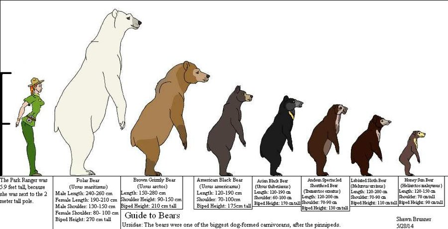 Largest Bear on Earth? | Earthly Mission Bear Species Chart