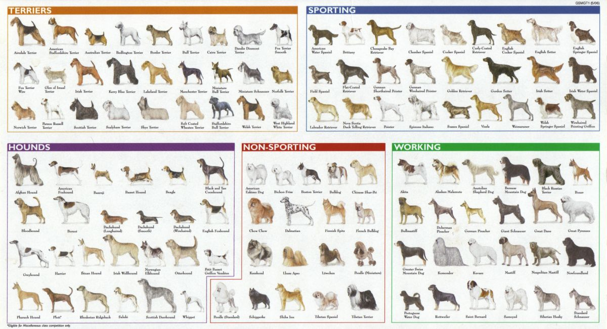 Breeds Of Different Animals On Amazing Charts Earthly