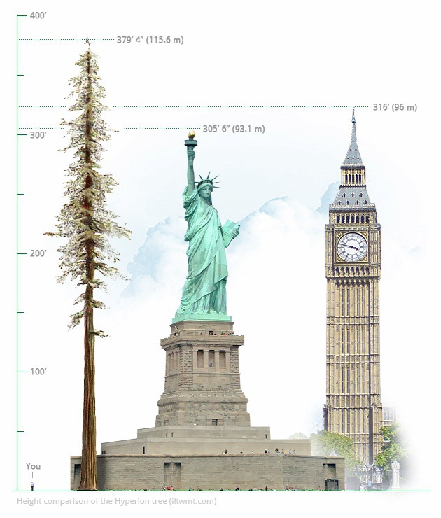 worlds-tallest-tree