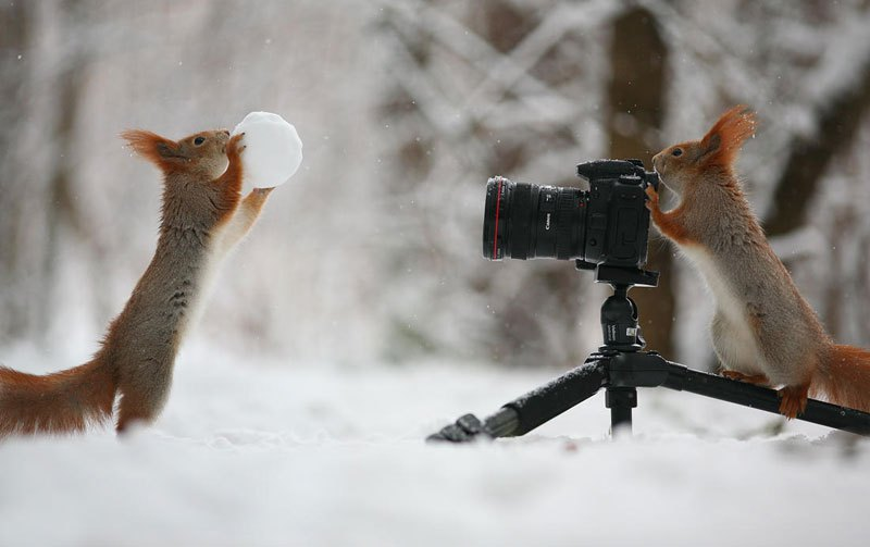 squirrel-snowball-fight-photos-by-vadim-trunov-1