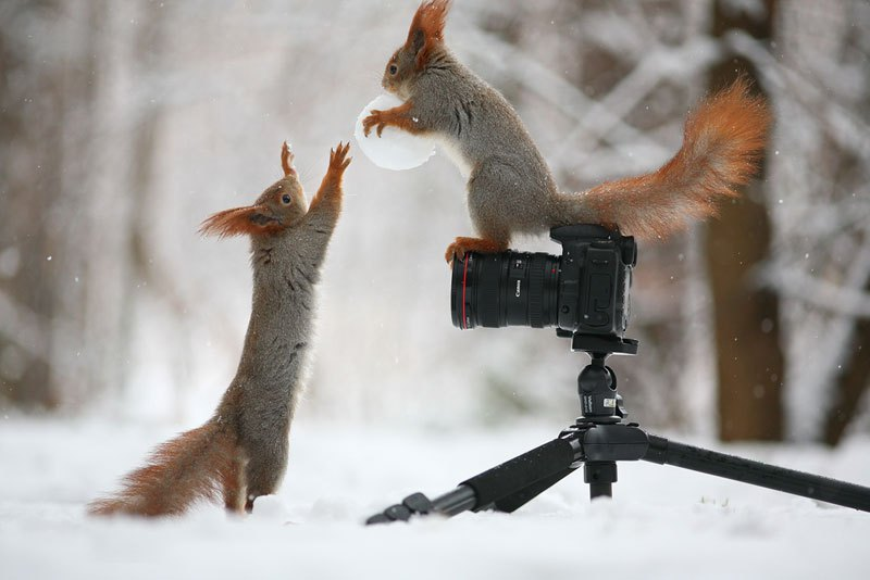 squirrel-snowball-fight-photos-by-vadim-trunov-11