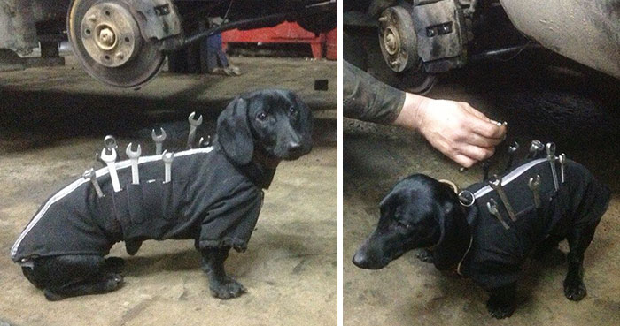 tool-dog-dachshund-suit-auto-mechanic
