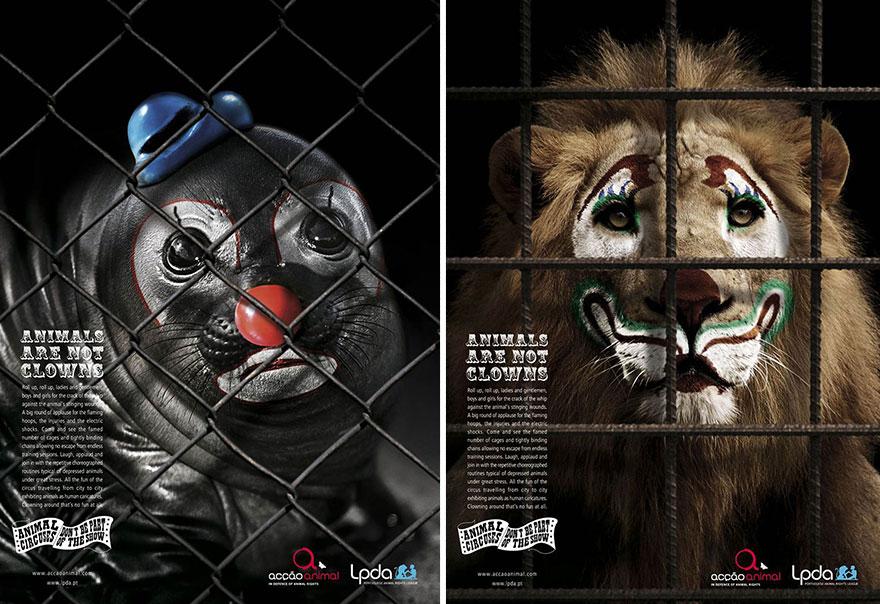 animal-abuse-1