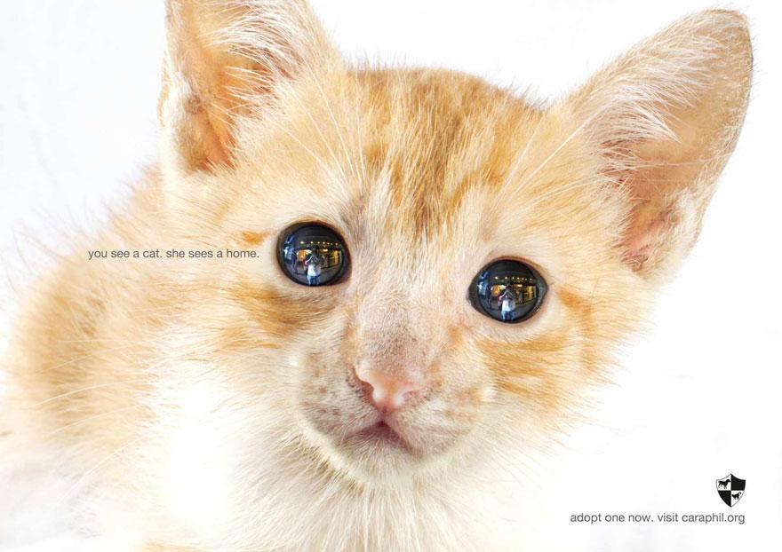 animal-abuse-32