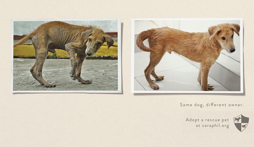 animal-abuse-39