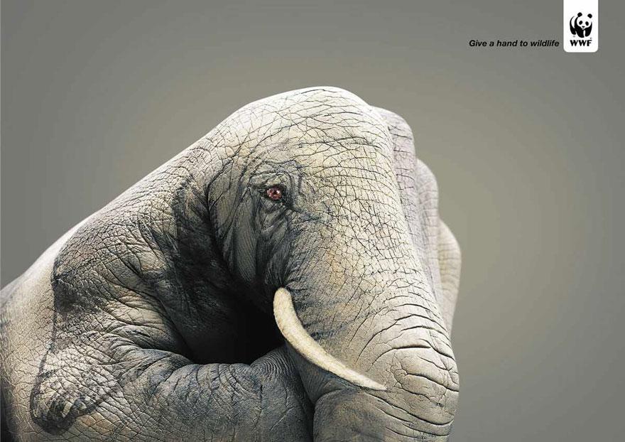 animal-abuse-44