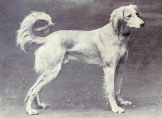 dog-breeds-100-years-apart-10