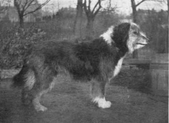 dog-breeds-100-years-apart-11