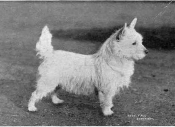 dog-breeds-100-years-apart-2