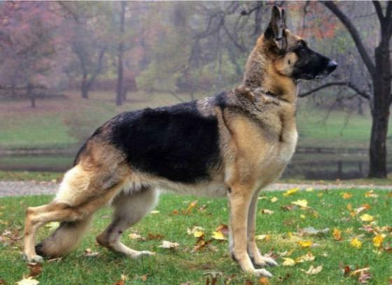 dog-breeds-100-years-apart-5b