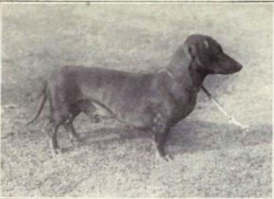 dog-breeds-100-years-apart-6