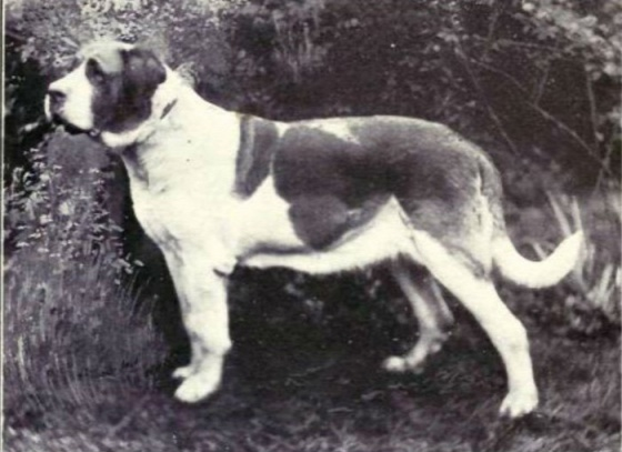 dog-breeds-100-years-apart-7