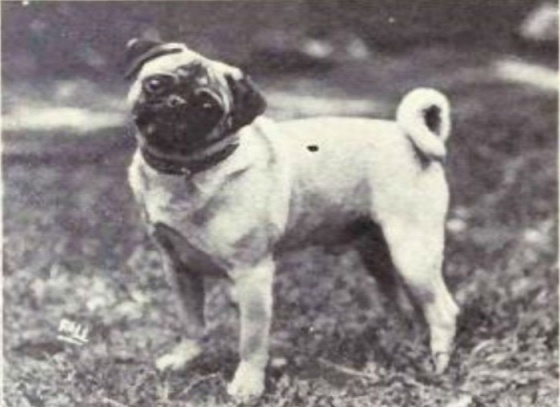 dog-breeds-100-years-apart-9