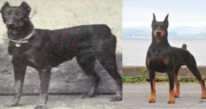 dog-breeds-100-years-apart-fb2