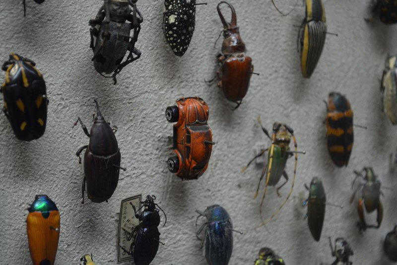 volkswagen-beetle-bug-cleveland-museum-of-natural-history-beetle-display-exhibit