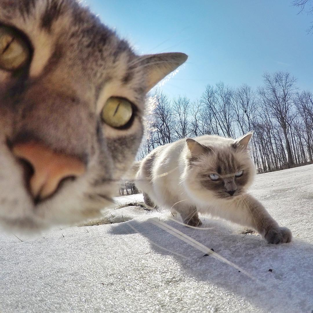 manny-cat-takes-selfies-dogs-gopro-17