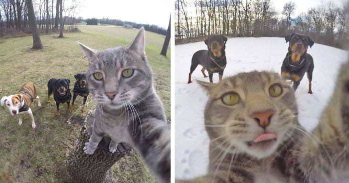 manny-cat-takes-selfies-dogs-gopro-fb-png