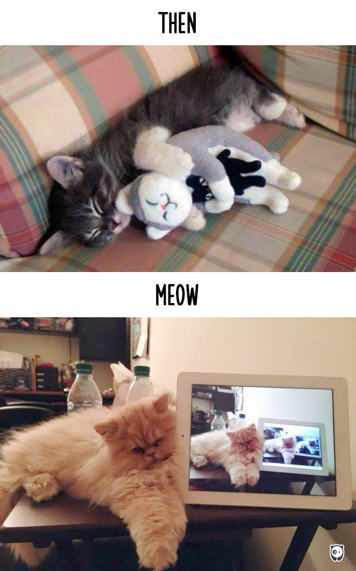 how-technology-has-changed-cats-lives-12