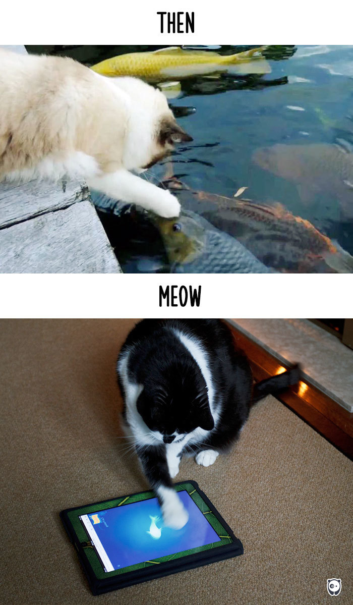 how-technology-has-changed-cats-lives-14