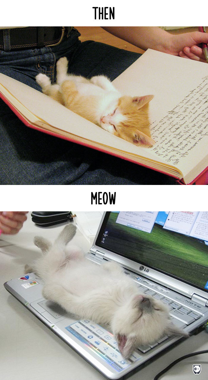 how-technology-has-changed-cats-lives-2