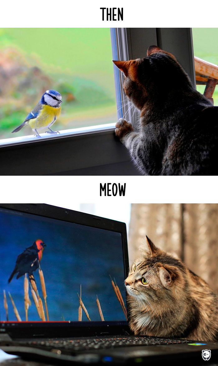 how-technology-has-changed-cats-lives-5