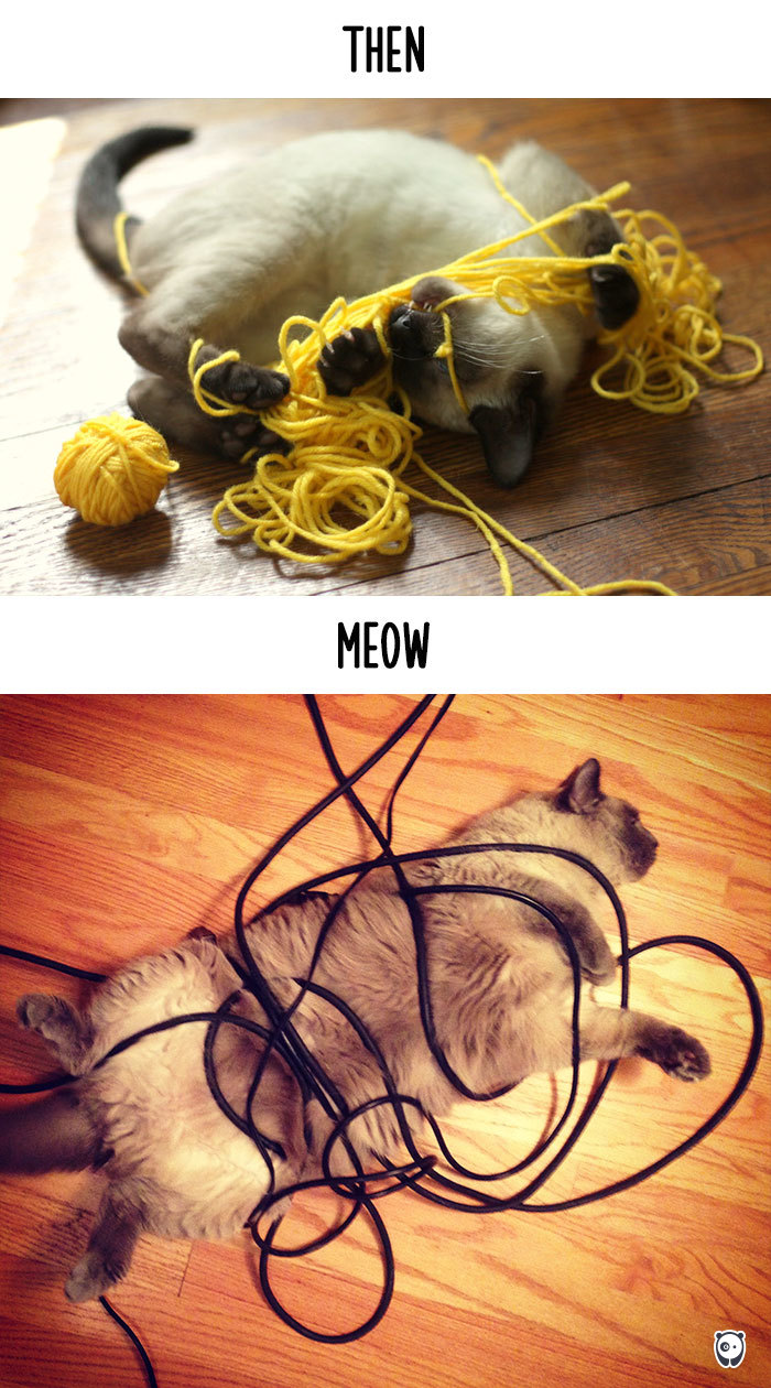 how-technology-has-changed-cats-lives-9