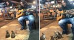 Music-Loving Kitties Come Up to Ignored Busker and Listen To Him Play