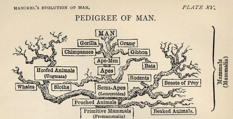 pedigree-of-man-fb