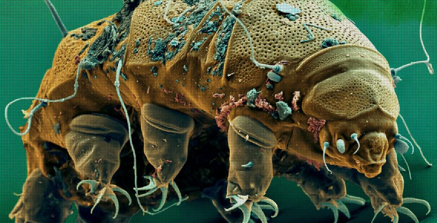 tardigrade-worlds-toughest-organism-fb