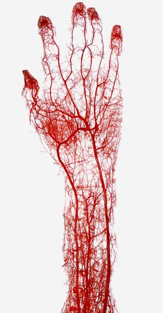 liquid-limbs-human-arteries-13