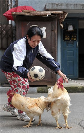 Zhang Lijun prepares to throw a football for two roosters she trained to play with the ball in Shenyang in northeast China's Liaoning province Thursday July 8, 2010. (AP Photo) ** CHINA OUT **