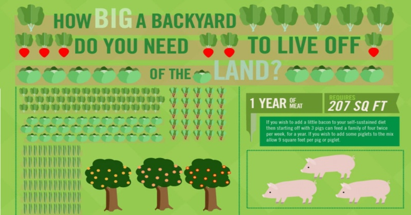 how-big-a-backyard-do-you-need-to-live-off-the-land-fb