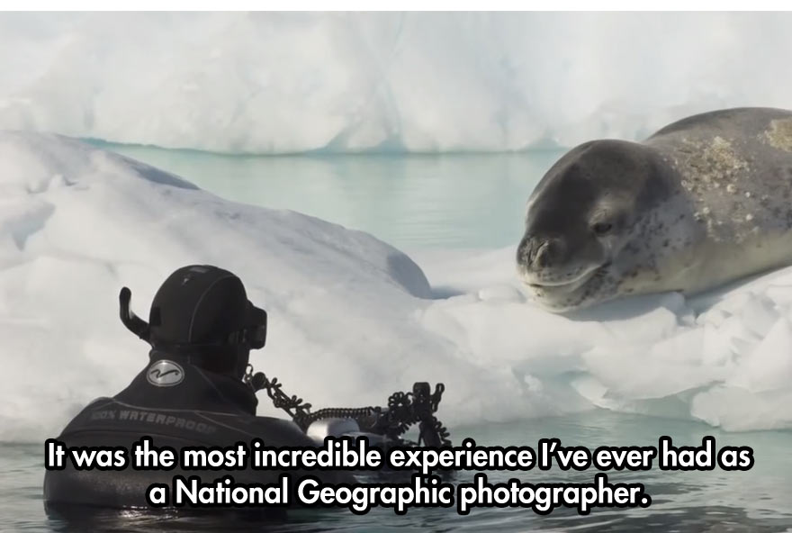 close-encounter-with-leopard-seal-10