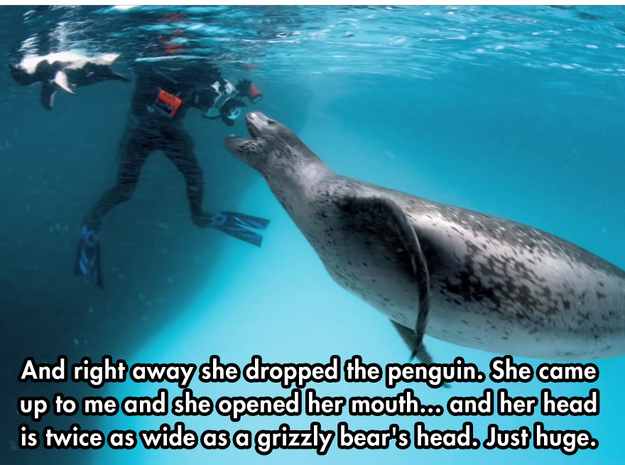 close-encounter-with-leopard-seal-2