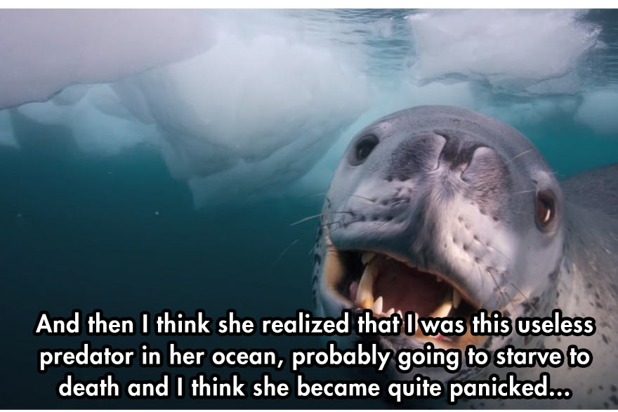 close-encounter-with-leopard-seal-6