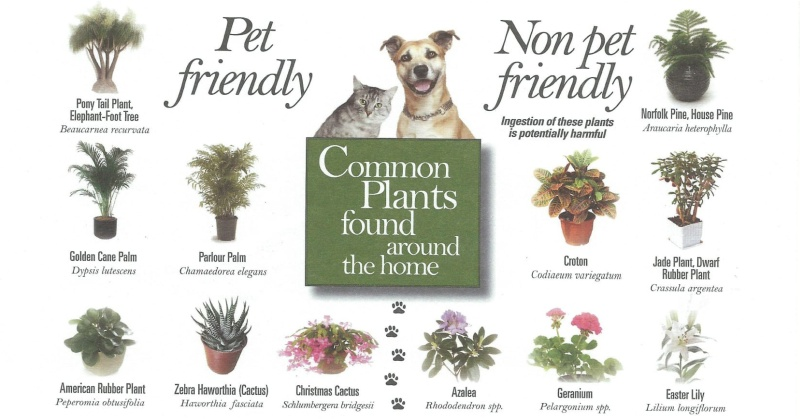 pet-friendly-plants-fb