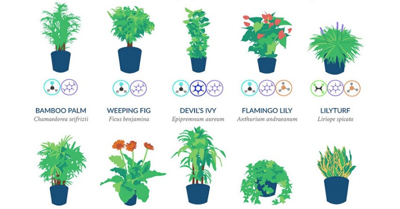 Nasa Reveals List Of Best Air Filtering Houseplants Earthly Mission