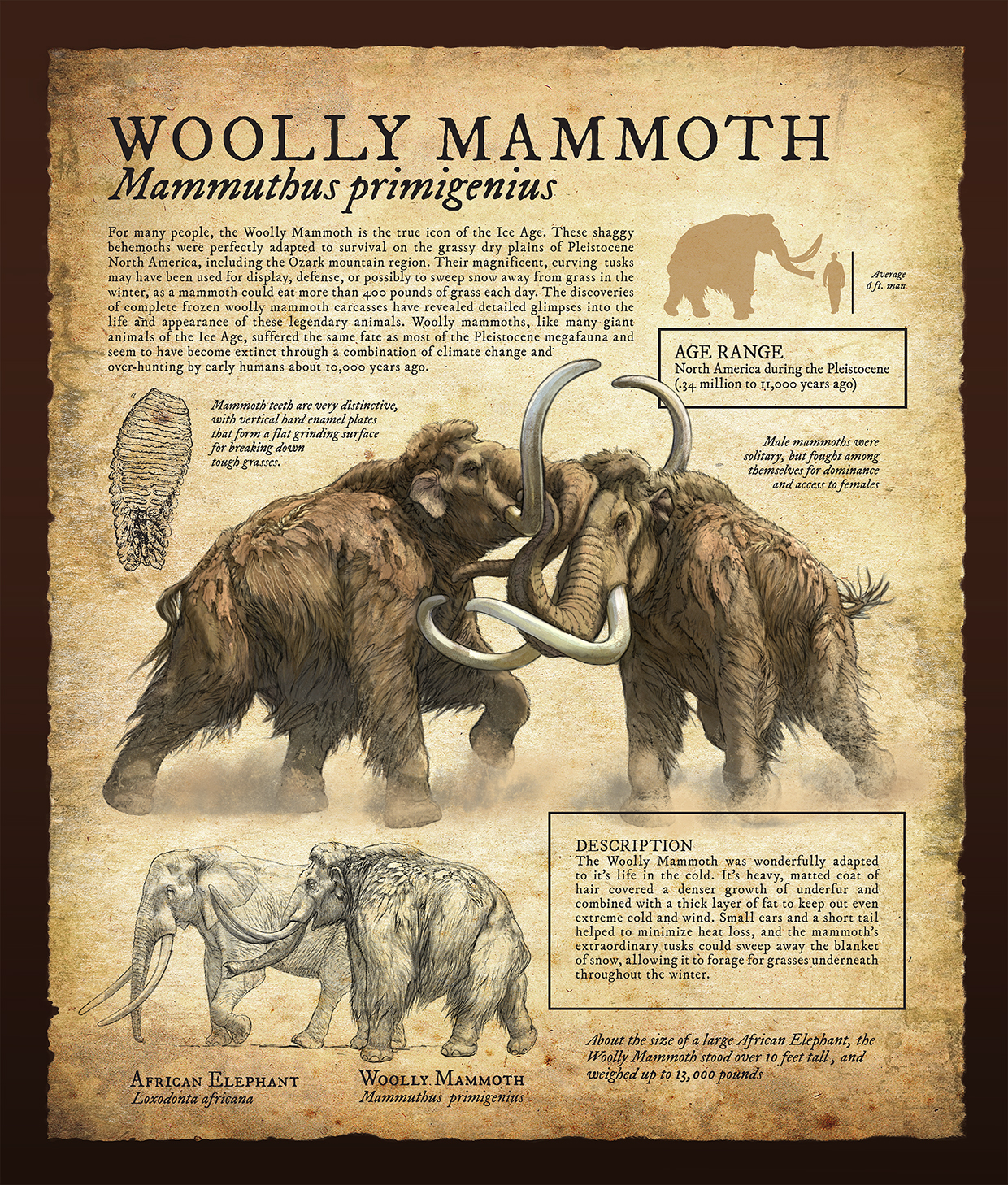 wooly mammoth infographic