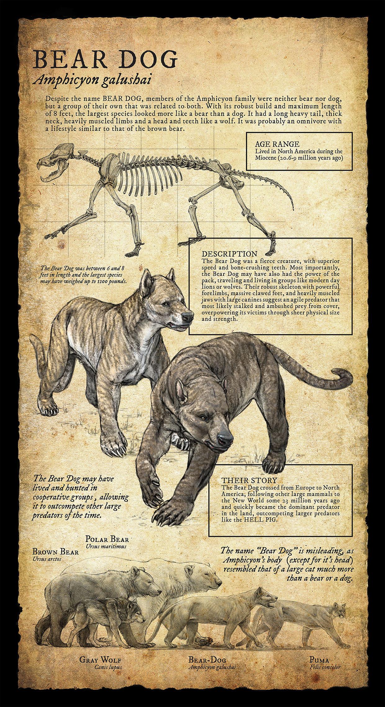 bear dog infographic