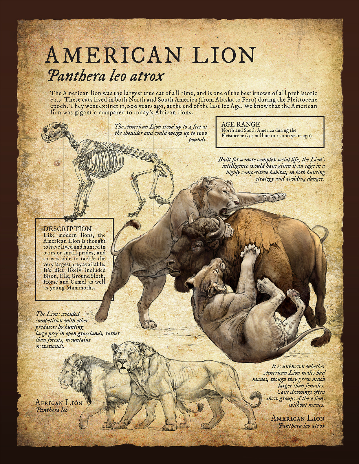 american lion infographic