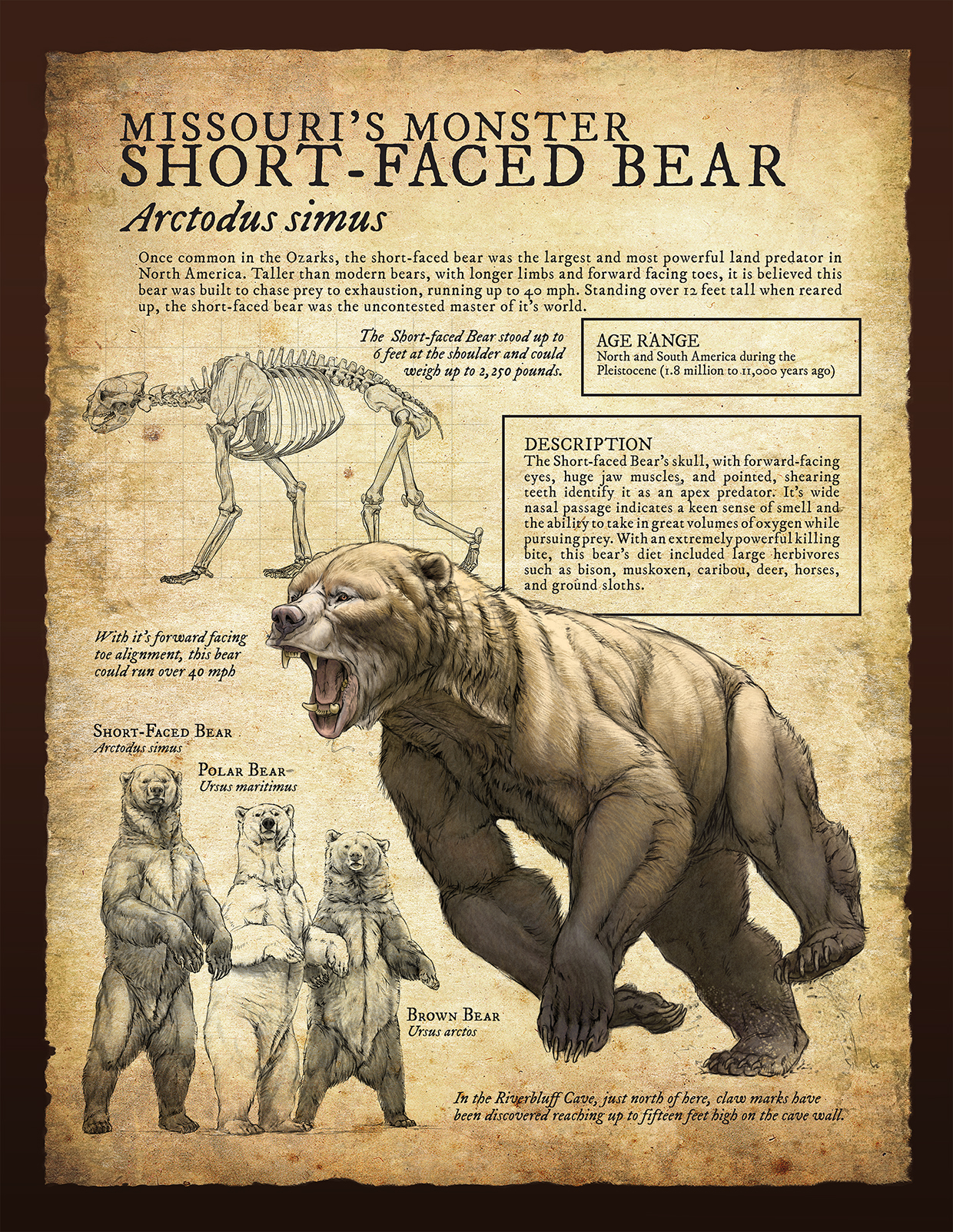 short-faced bear infographic