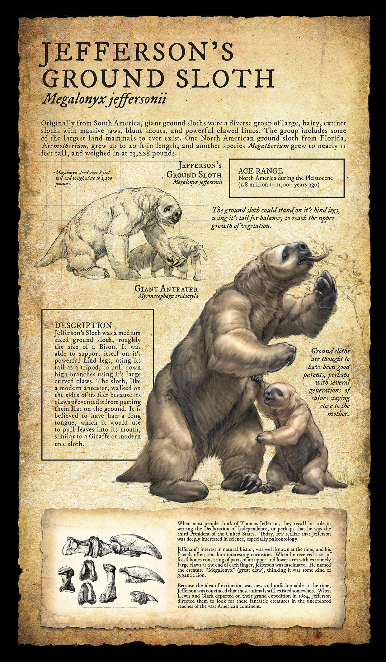 jefferson's ground sloth infographic