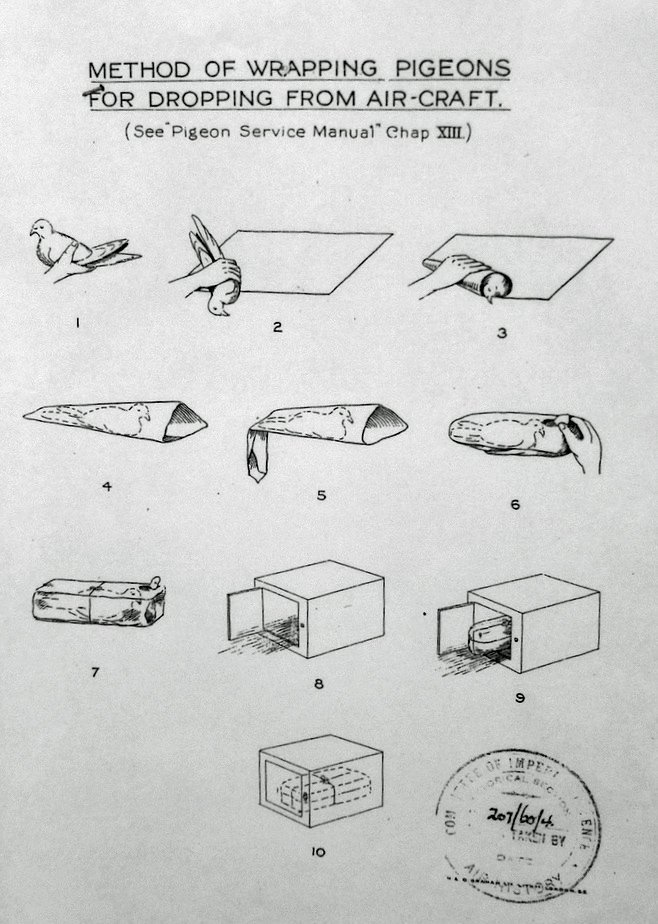 wrap pigeons aircraft picture infographic