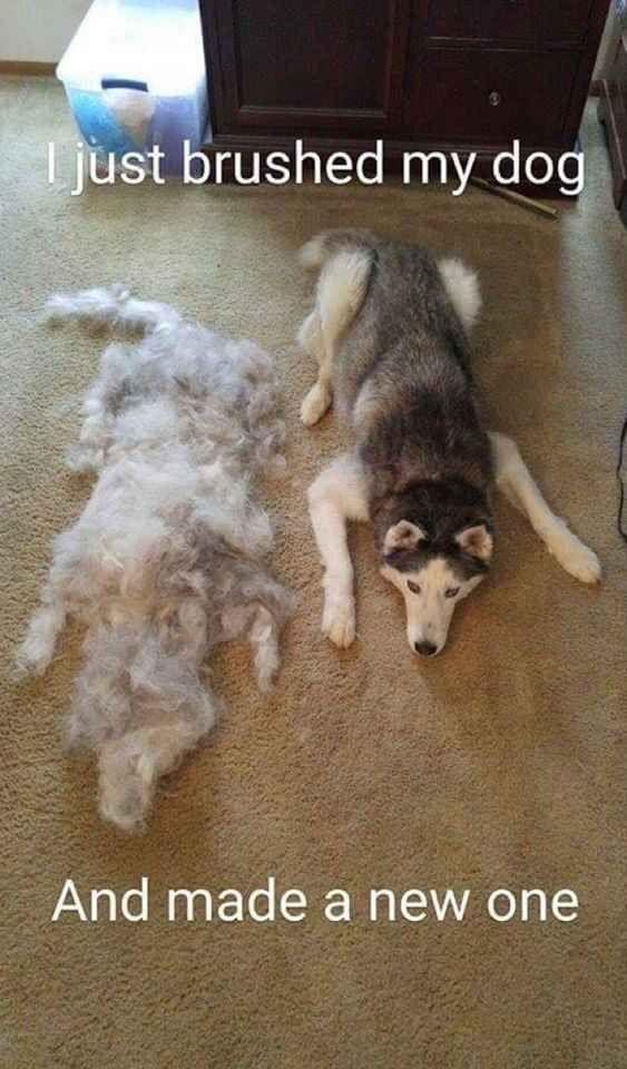 funny dog brushed