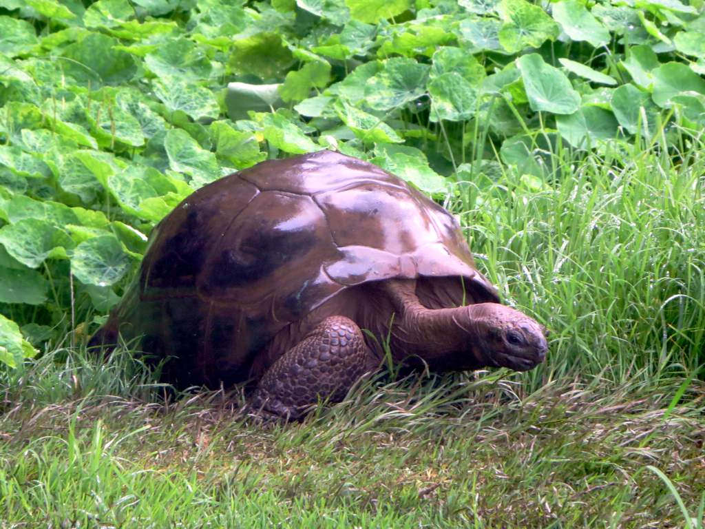 jonathan tortoise world oldest animals