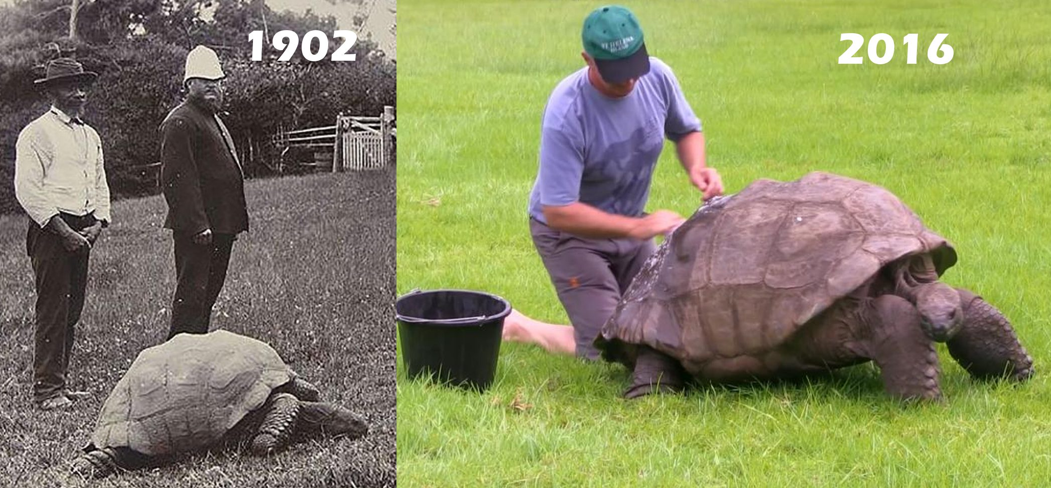 oldest animal jonathan tortoise