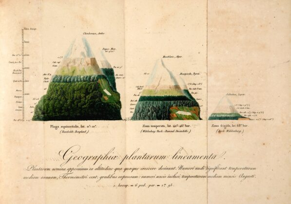 Alexander Humboldt, Comparison of Plants founf on Chimborazo, Mont Blanc, and Sulitjelma in Norway, 1817