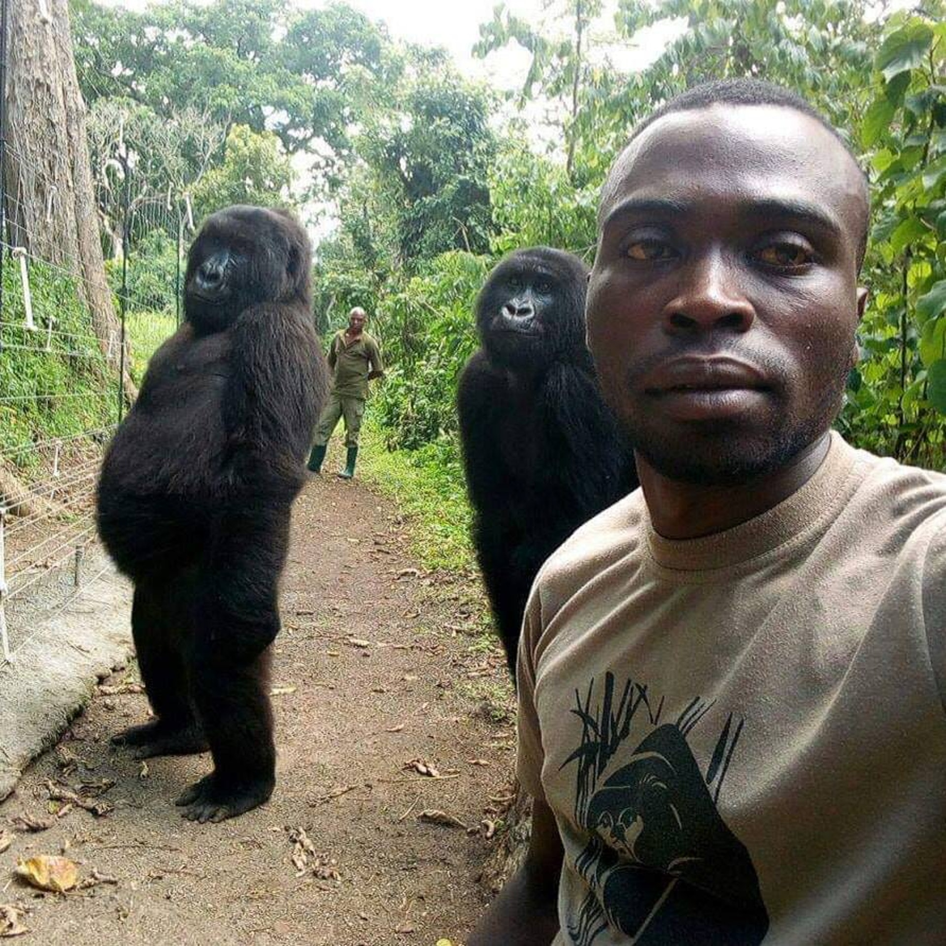 selfie with gorillas