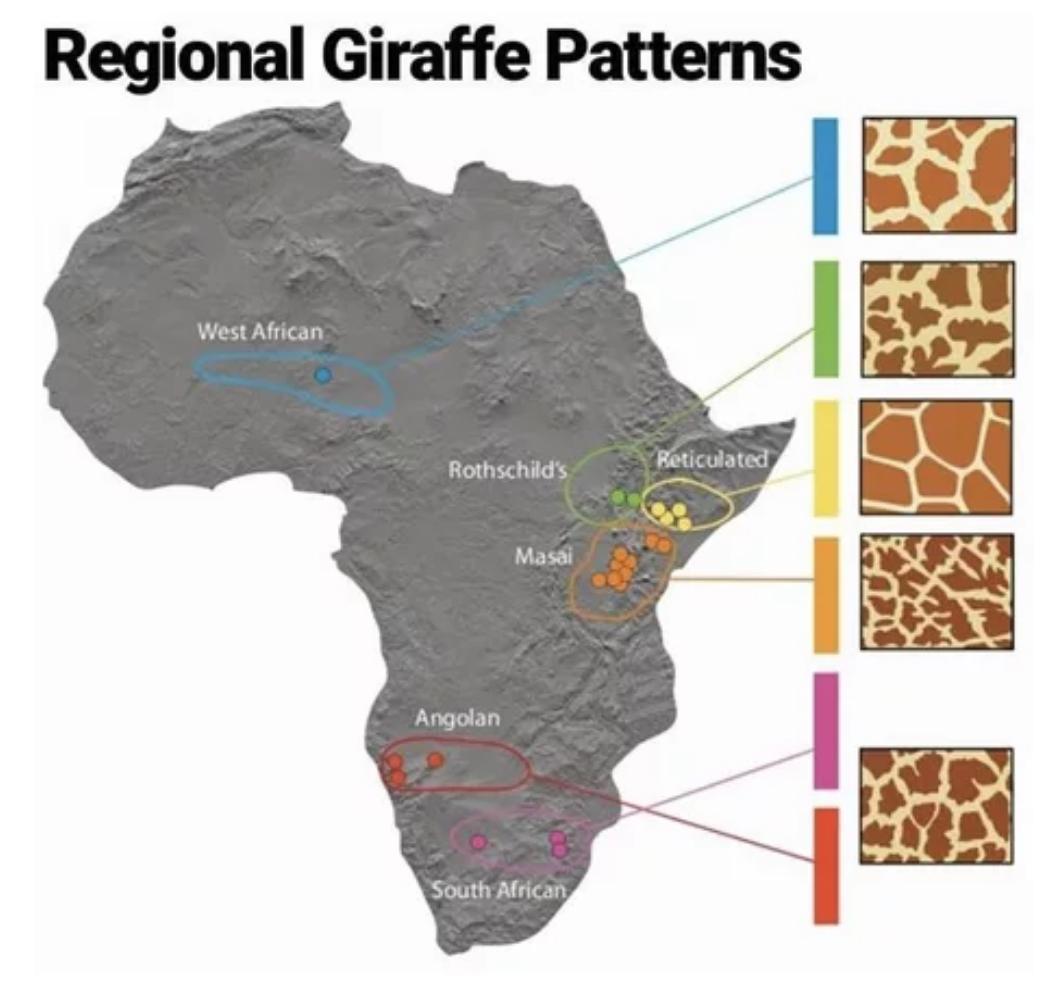 africa regional giraffe patterns